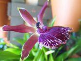 flower1.2