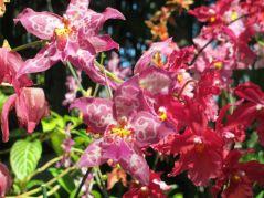flower2.2